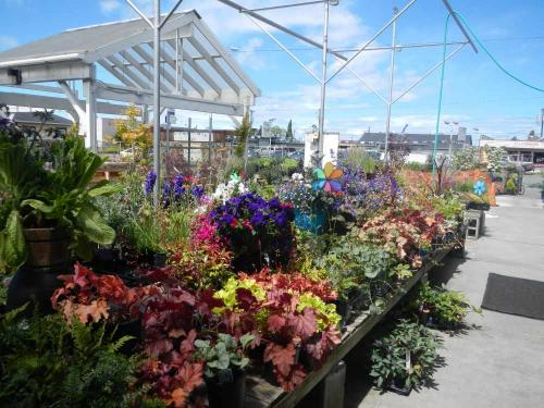 Port Angeles Plants, Greenhouse and Nursery